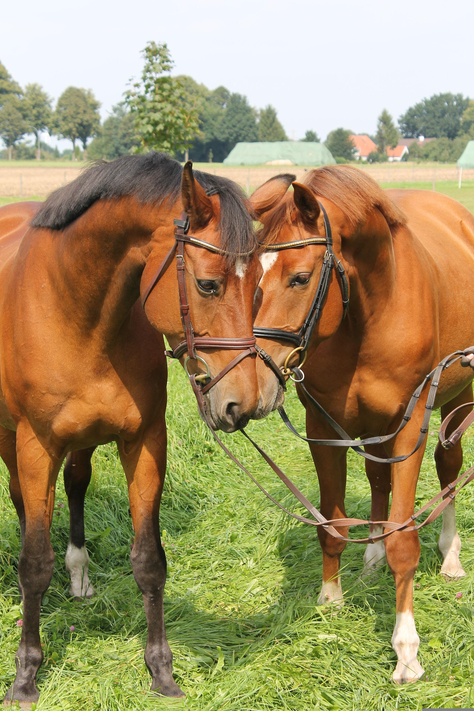 vit for horses